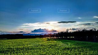 背景に木がある大きな緑の野原の写真・画像素材[2267493]