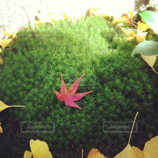 花のクローズアップの写真・画像素材[2269178]