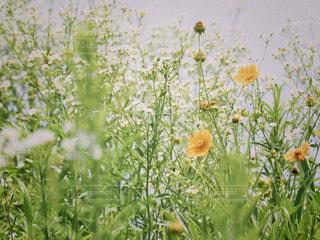 花のクローズアップの写真・画像素材[2272050]