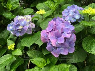 花園のクローズアップの写真・画像素材[2272796]