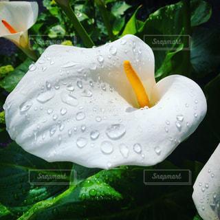 花のクローズアップの写真・画像素材[2269732]