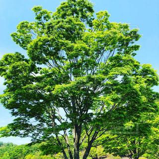 木のクローズアップの写真・画像素材[2269745]