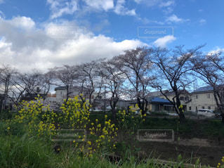 春の花木の写真・画像素材[2296489]