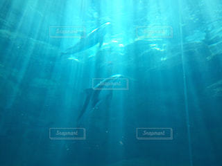 光が差し込む水槽での写真・画像素材[2298200]