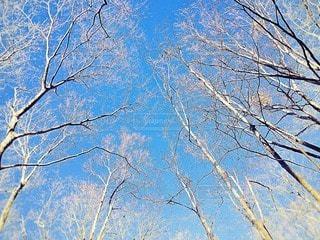自然の写真・画像素材[90064]