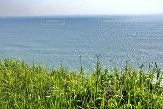 海辺の崖の上で海風に揺れる野草の写真・画像素材[2285762]