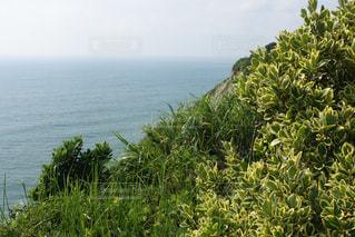 崖の上の海浜植物の写真・画像素材[2285764]