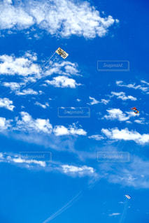 緑の芝生広場と沢山の凧さん達の写真・画像素材[2287311]