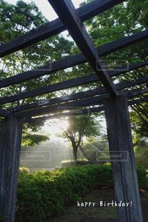 朝もやの公園の写真・画像素材[2290473]