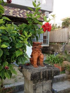 沖縄のシーサーとハイビスカスの写真・画像素材[2273002]