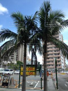 沖縄の写真・画像素材[2274970]