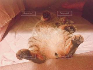 猫の写真・画像素材[2283721]