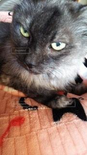 猫のクローズアップの写真・画像素材[2286346]