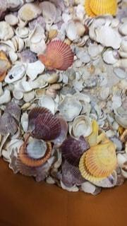 色々な貝の写真・画像素材[2321590]
