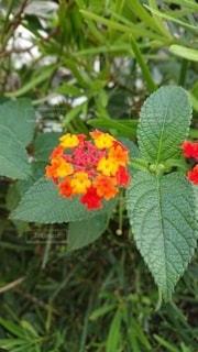 可愛い花の写真・画像素材[2605073]