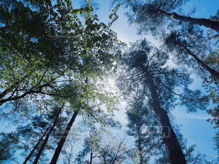 木漏れ日の写真・画像素材[2279267]