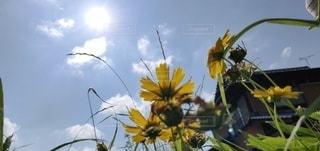 花のクローズアップの写真・画像素材[2272452]