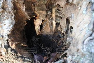 木の幹のクローズアップの写真・画像素材[2709517]