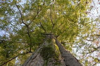 森の中の木の写真・画像素材[2709520]