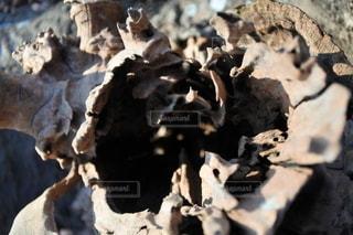 木の幹のクローズアップの写真・画像素材[2709519]