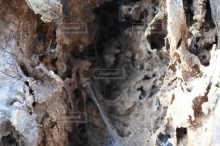 木の幹のクローズアップの写真・画像素材[2709521]
