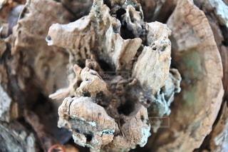 木の幹のクローズアップの写真・画像素材[2709523]