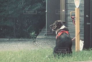 建物の前に座っている黒い犬の写真・画像素材[2411126]
