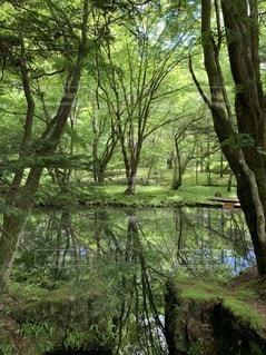 森の中の景色の写真・画像素材[2272717]