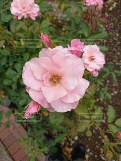 花のクローズアップの写真・画像素材[2274315]