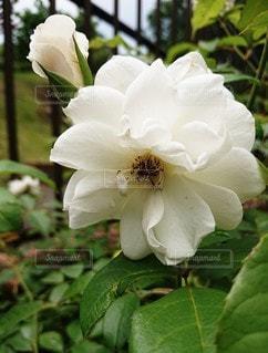花のクローズアップの写真・画像素材[2274317]