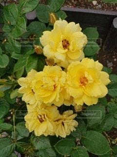 花のクローズアップの写真・画像素材[2274320]