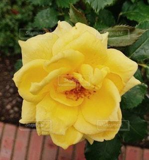 花のクローズアップの写真・画像素材[2274322]