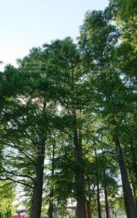 安らぎの木の写真・画像素材[2281783]