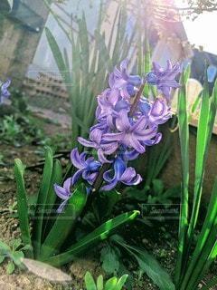 花のクローズアップの写真・画像素材[2279934]