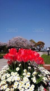 春の写真・画像素材[3073452]