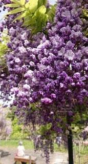 花園のクローズアップの写真・画像素材[4361582]