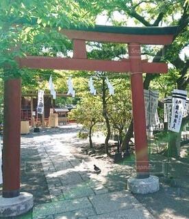 鎌倉の鶴岡八幡宮の写真・画像素材[4391608]