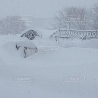 雪の写真・画像素材[307862]