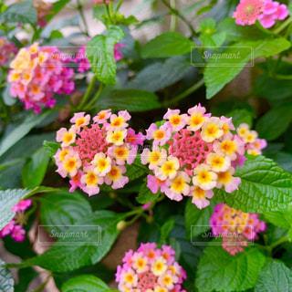 花園のクローズアップの写真・画像素材[2275346]
