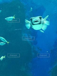 水の中を泳ぐ鳥の写真・画像素材[2276446]