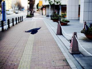明け方の街の写真・画像素材[2275217]