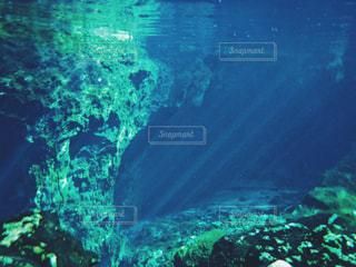 メキシコグランセノーテ、水中写真の写真・画像素材[2505260]