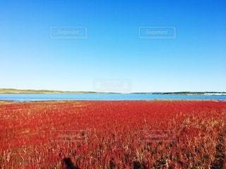 野原の大きな赤い凧の写真・画像素材[2783519]