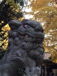 狛犬の写真・画像素材[95219]