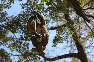 木の枝につるされた鳥の写真・画像素材[2277373]