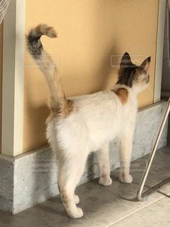 探す猫の写真・画像素材[2277506]