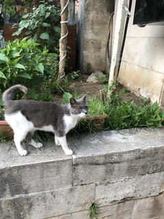 庭に来る猫の写真・画像素材[2277508]