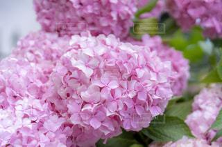 花のクローズアップの写真・画像素材[2277612]