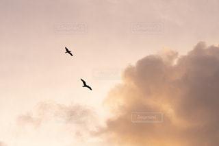 夕方に飛んでいる鳥の写真・画像素材[2277746]