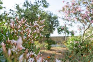 花園のクローズアップの写真・画像素材[2278278]